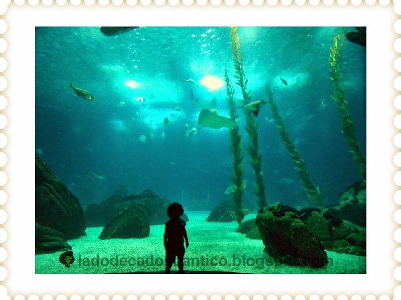 Vulto do Miguel no térreo do Oceanário de Lisboa, frente ao grande aquário