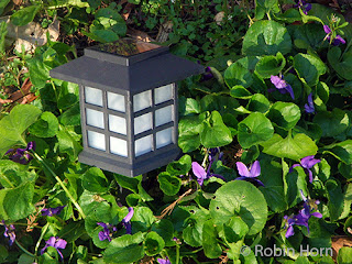 Violets Surrounding Lamp