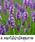 6 ดอกไม้ช่วยบำบัดสุขภาพ