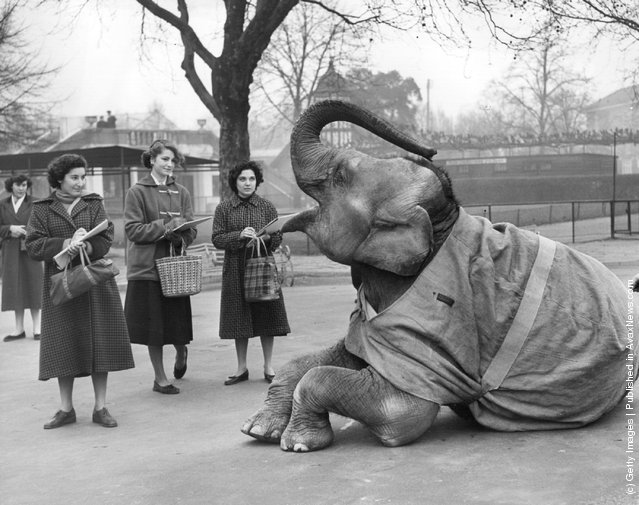 Old+&+Funny+Photos+of+Elephants+(6).jpeg