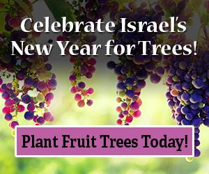Plant fruit trees in Israel