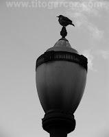 Pássaro e luminária no jardim do Museu Paulista (ou Museu do Ipiranga), em São Paulo