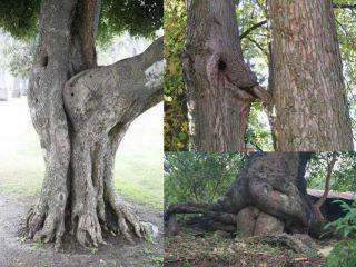 Sex behind an old tree