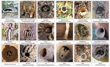 Fotos de algumas entradas de abelhas nativas.