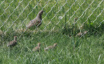 Gray Partridge family