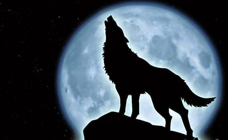 This is quite plausible as animals during the times of a full Moon exhibit an agitated type of behaviour that is beyond their norm.