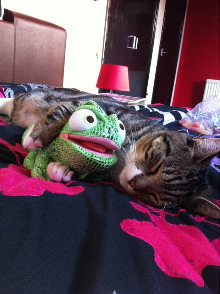 funny cat pictures, kitten sleeping and hugging his toy