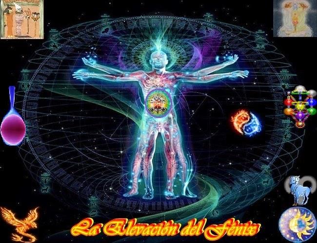 ¡El Símbolo del Fénix es una poderosa Energía de Fuego que se está elevando en la Tierra, transmutando y transformando las cenizas de lo viejo en una nueva siembra!