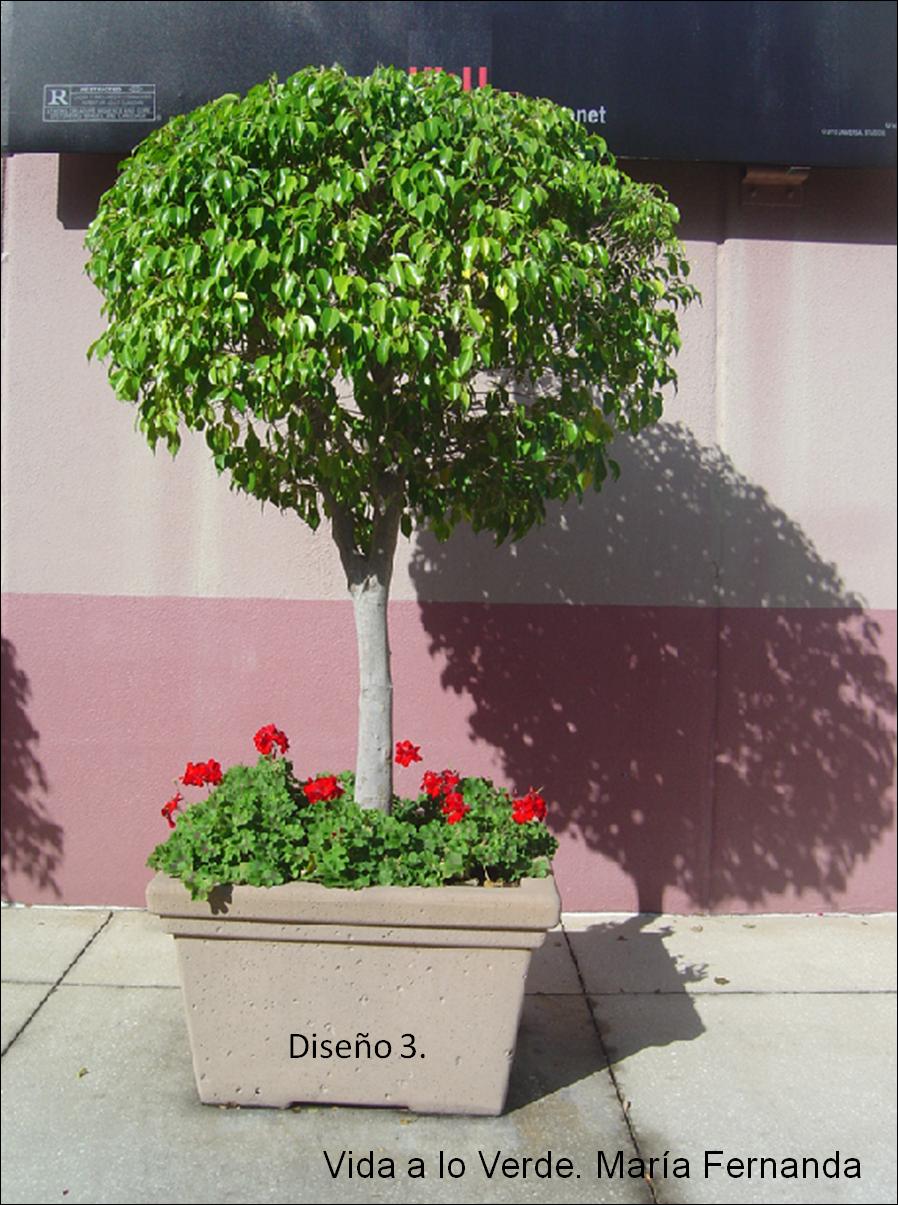 Vida a lo VerdeLiving in Green Escoge las plantas apropiadas para