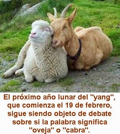 MUNDO: ¿Qué fue primero, la oveja o la cabra? Arqueólogos chinos saben cuál se domesticó antes