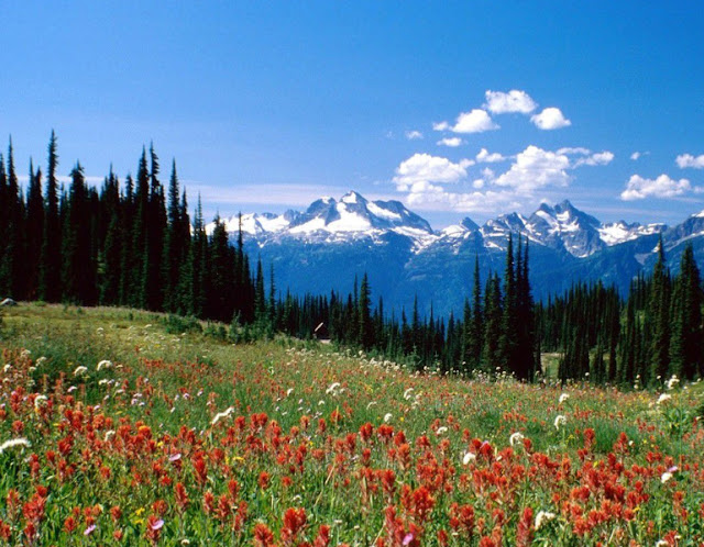 The Simple Beauty Of Nature: Mount Revelstoke National Park