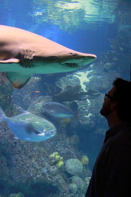 OTIS Odd Things Ive Seen New England Aquarium