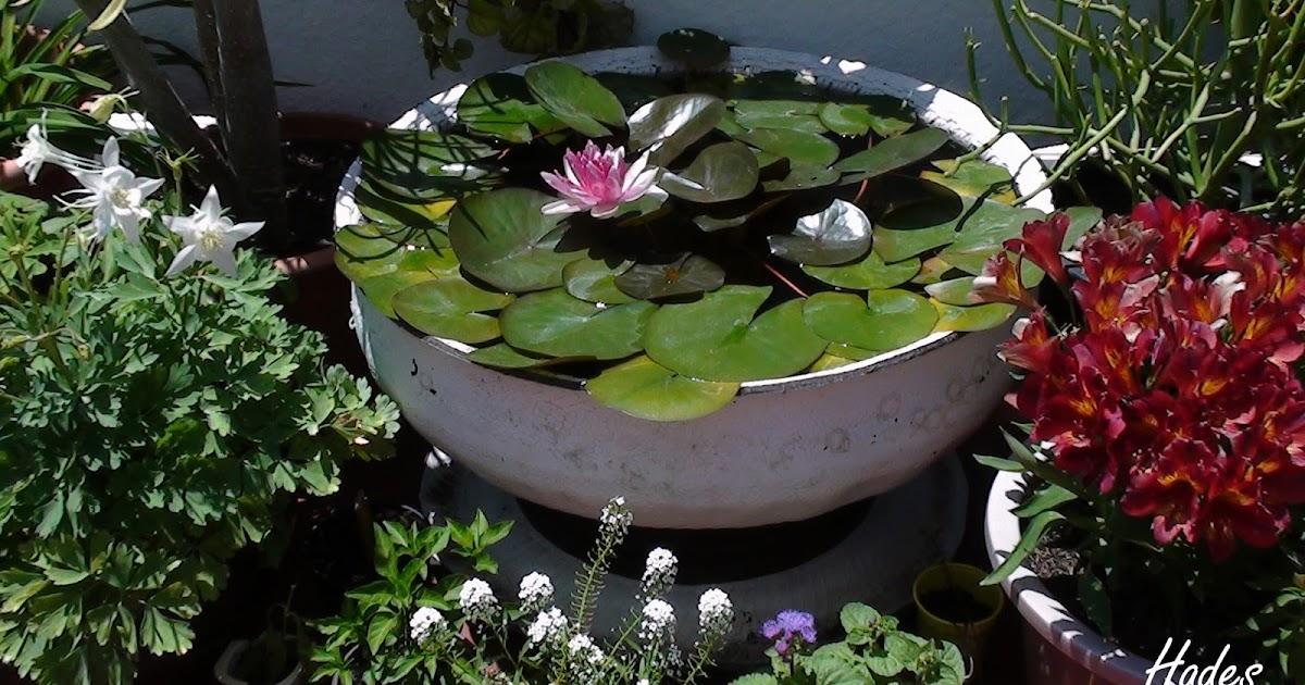 Jardineando ando mini estanque con neum tico en forma for Estanque de cemento paso a paso