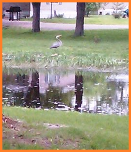 Heron on the edge of a quiet river.