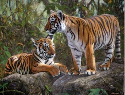 bonitos-tigres