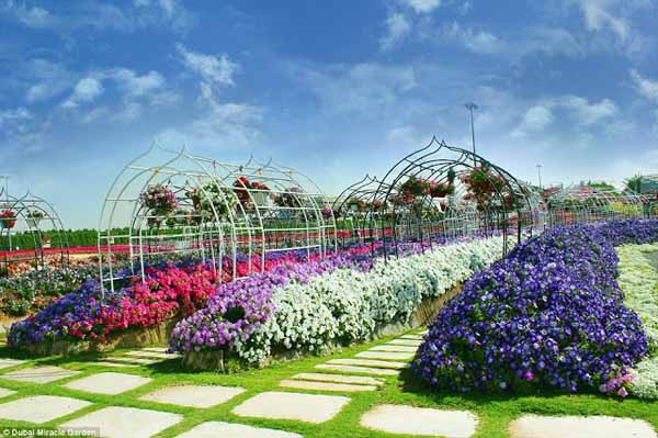 The Dubai Miracle Garden
