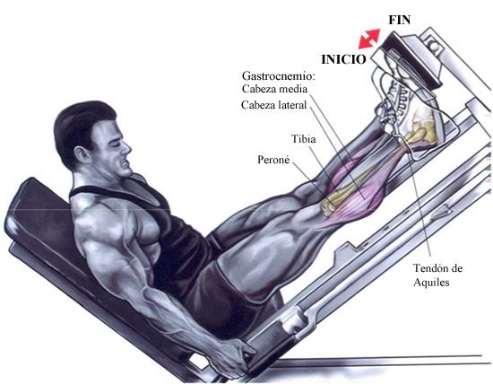 Gym elevaci n de punteras para gemelos en prensa inclinada for Gimnasio 6 y 45