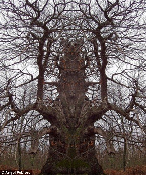 The Tree Of Terror