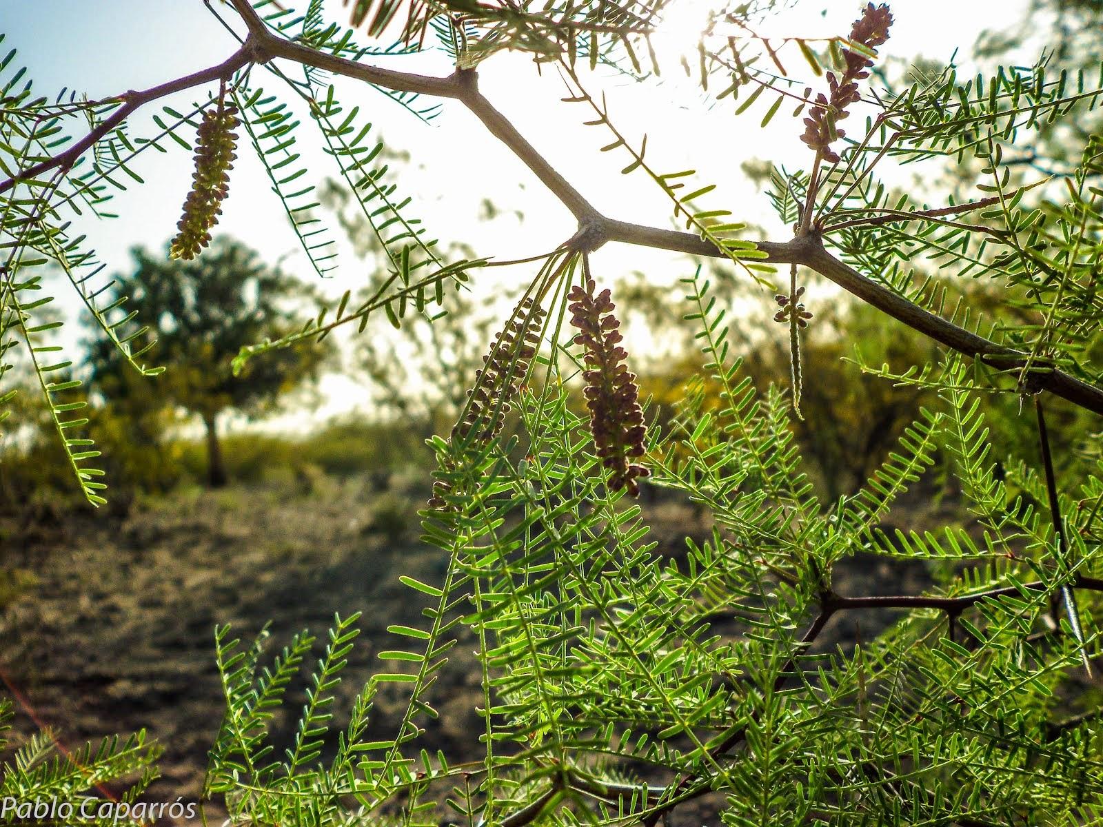 Flora que habita en Mendoza