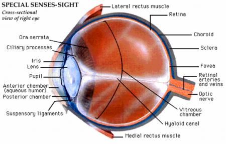 Sakit Mata Glaukoma