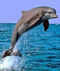 Dolphin Boat Trips In Goa