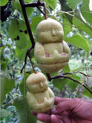 MISTERI , PELIK DAN.....: Gambar Buah-buahan dan sayura