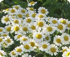 Лечебните билки в България