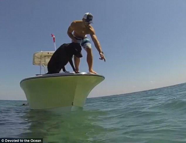 как лабрадор ловит рыбу