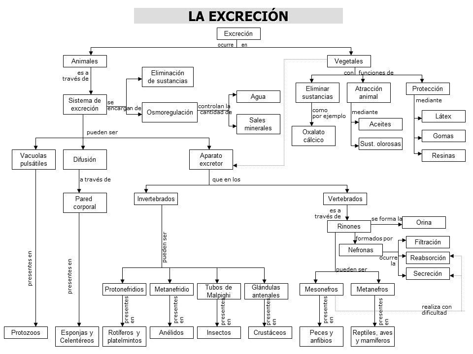 CIENCIAS NATURALES: EXCRECION