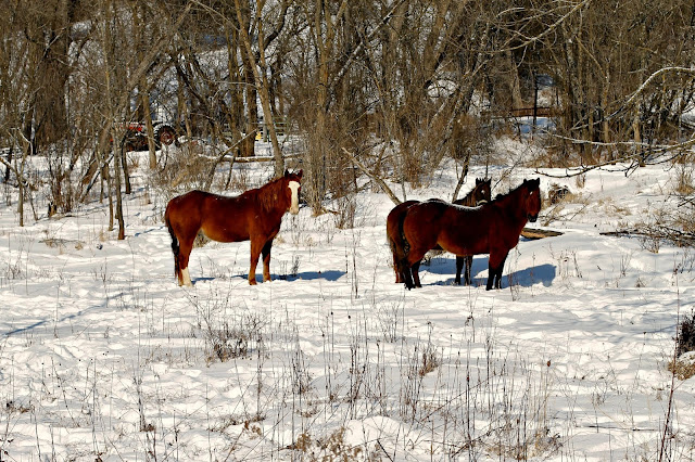 horses on a cold winter's day
