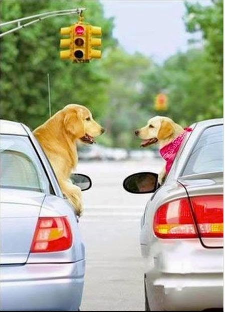 Tumblr Two cute dogs chat at a red light. Arrrffff, arrf bark doggie park, bark, bark ruff, ruffff play ball, rufff, ruff, arfff arffff, cool, see you soon! For more cute dogs and puppies
