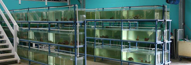 Asesor a trucha y tilapia for Crianza de tilapia en estanques