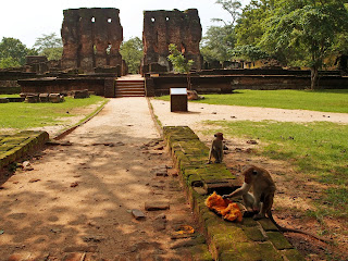 Lunchtime for the monkeys with the Palace of King Parakramabahu in the background