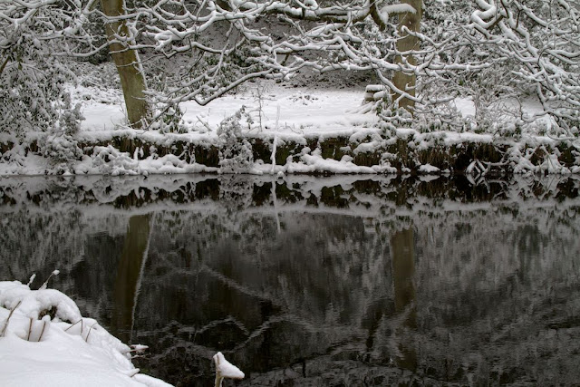 More Reflections in the Pond