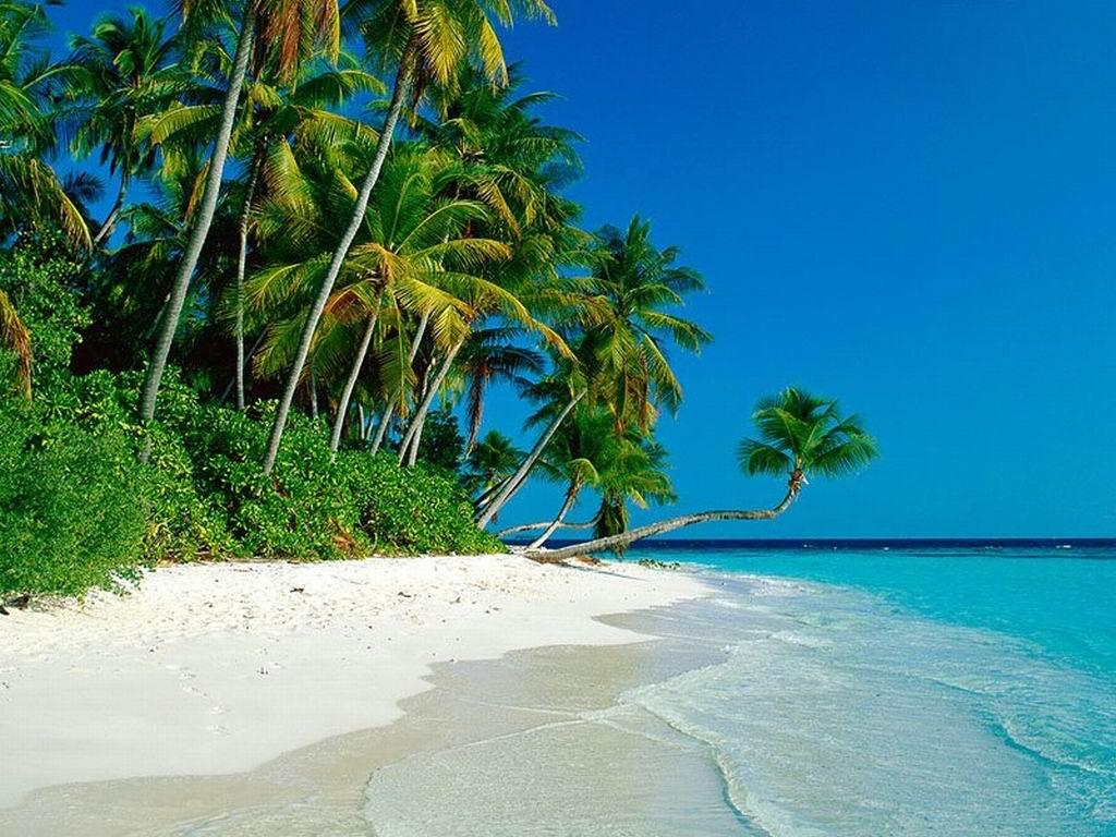 http://2.bp.blogspot.com/-G23okDEsyUg/ToGi6Cf4wEI/AAAAAAAAAWE/WfCQQTXcISg/s1600/Picture_Beach_Paradise_Nature_Free.jpg
