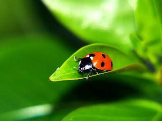 Gambar Serangga
