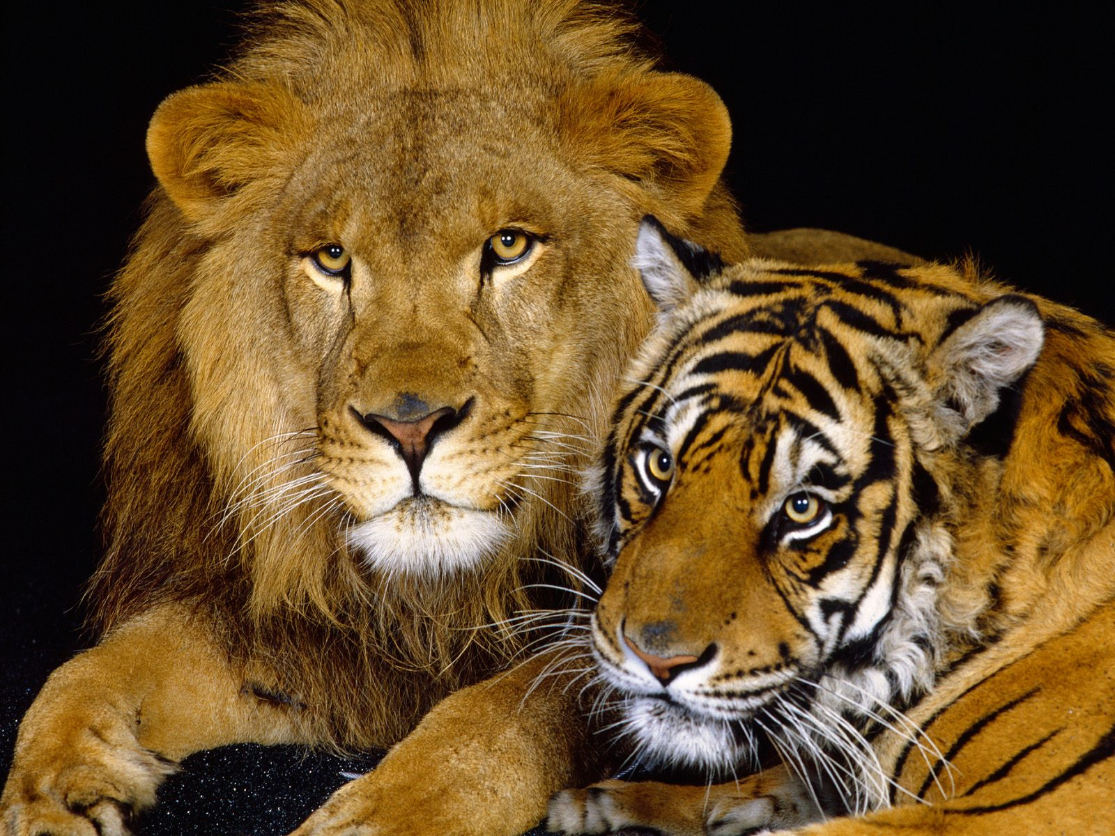 3d wallpapers hd animals - photo #18