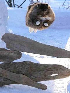 cat flies over logs