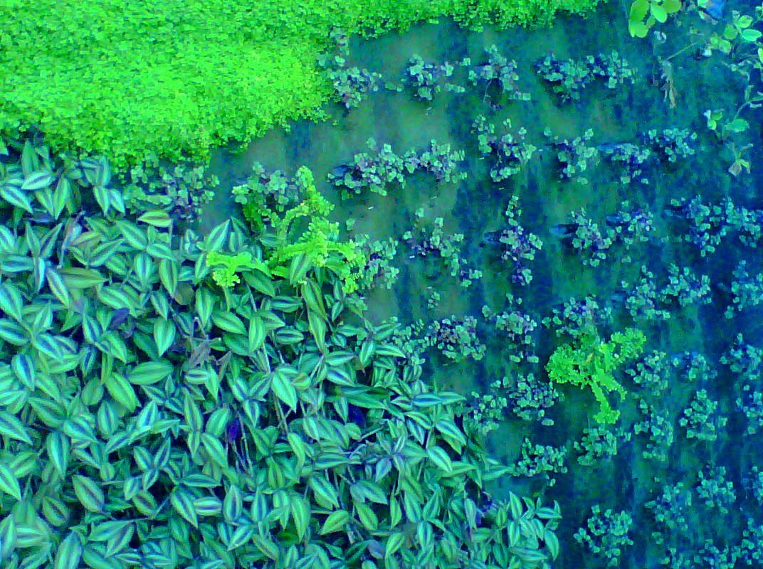 Jardines verticales monterrey plantas colores for Jardines verticales mexico