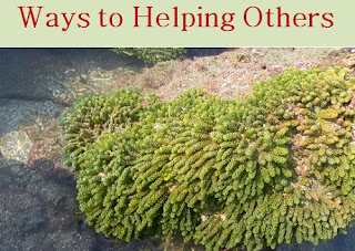 Ways to helping others