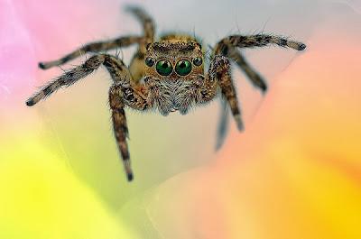 FOTO Indahnya Laba-laba di Depan Kamera