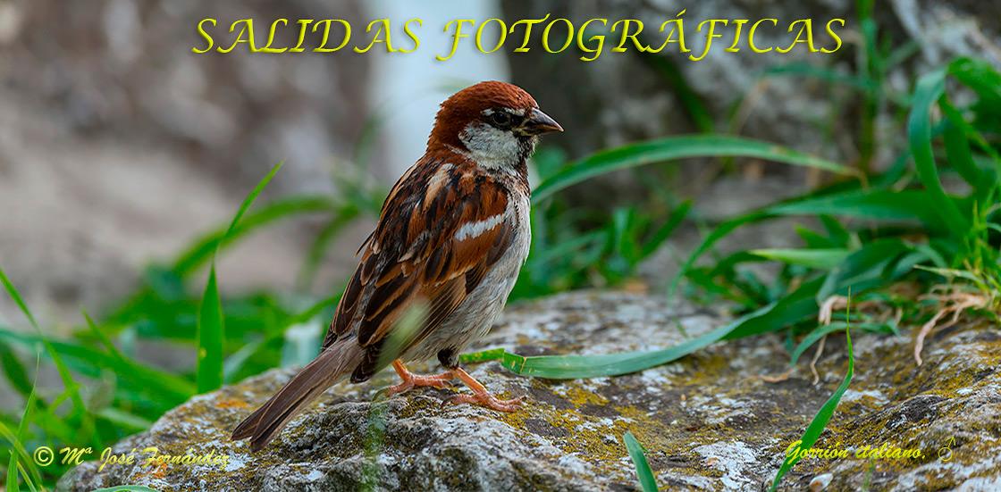 SALIDAS FOTOGRÁFICAS
