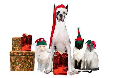 Perros y gatos navideños con gorritos de santa claus