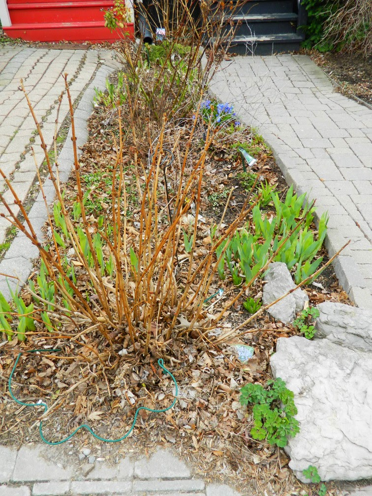 Spring garden cleanup Leslieville before Paul Jung Gardening Services Toronto
