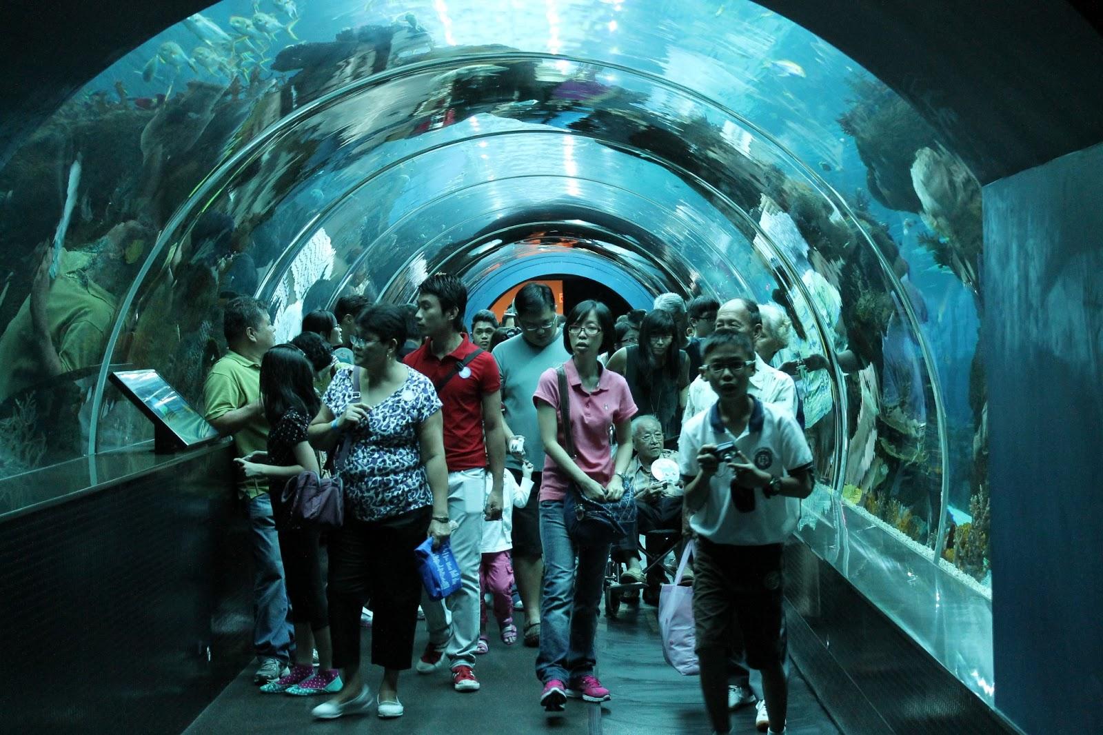 Minnesota Baby The World 39 S Largest Aquarium