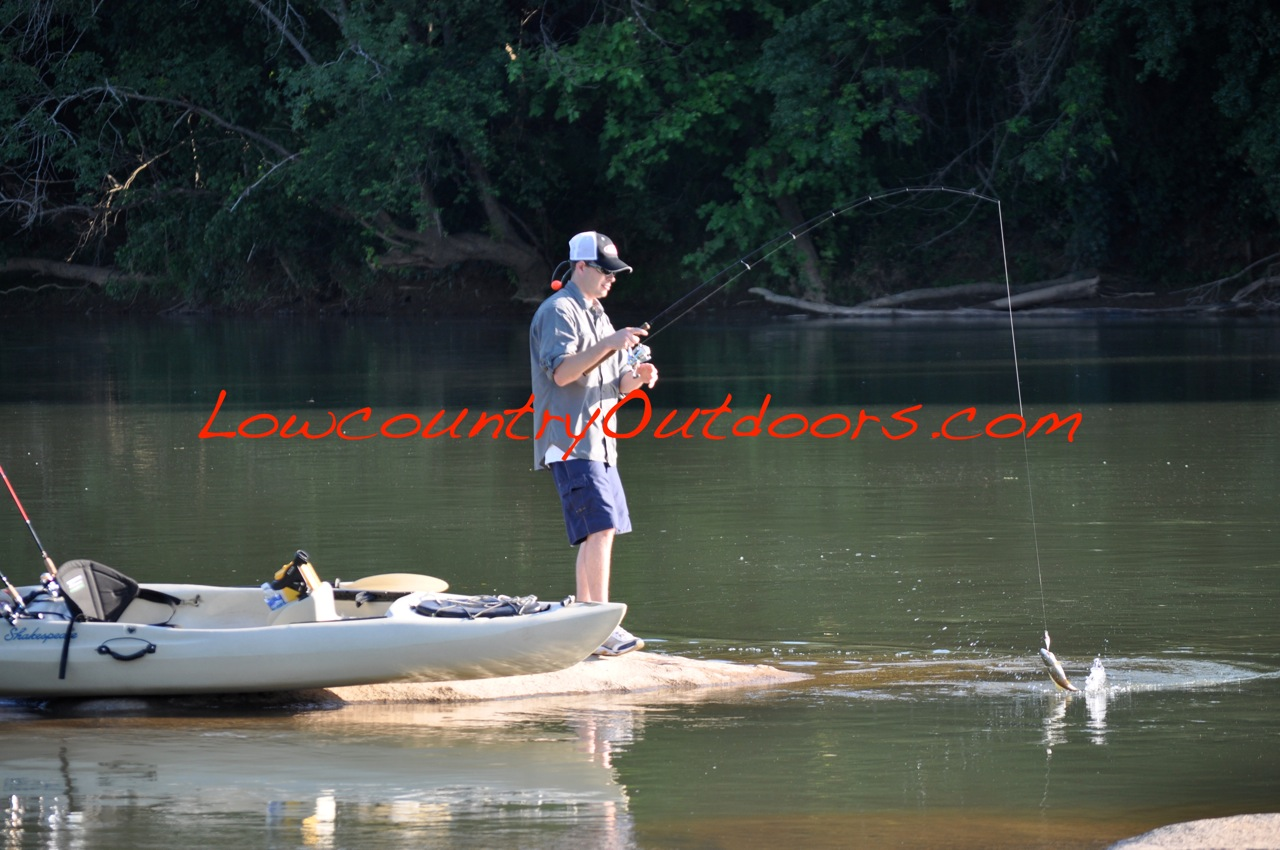Lowcountry outdoors freshwater fishing tips for april may for Freshwater kayak fishing