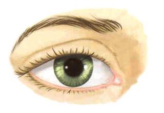 Vista y ojo