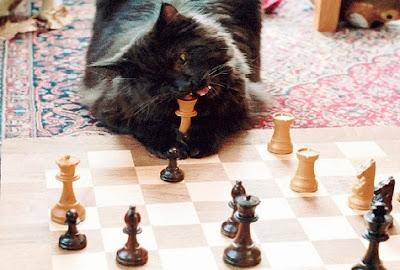 Gato comiendose al rey de ajedrez