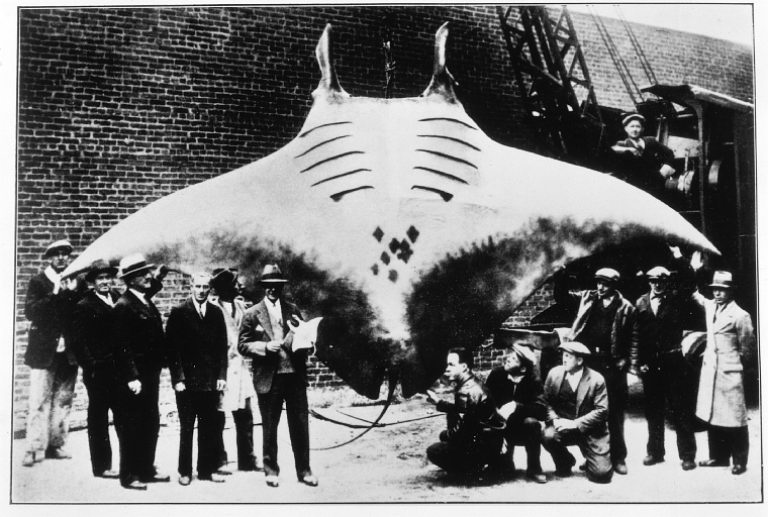 This is not how you should treat a manta ray