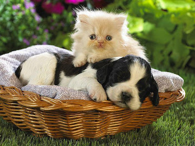 Very Cute Kittens Pictures